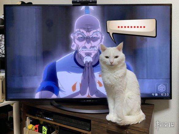 发动爱心也不为所动的猫皇!喜欢待在电视前的猫