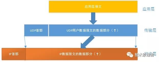 UDP和上下层的关系