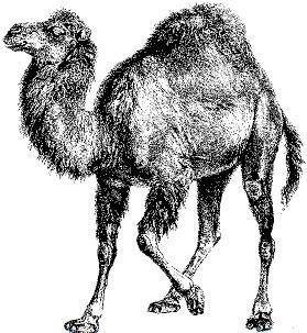 MongoDB将弃用 Perl 驱动,Perl 还能行吗?